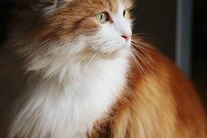 Schnurhaare_einer_Katze